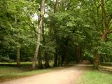 シュノンソー敷地の森