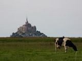 牛とモンサンミッシェル